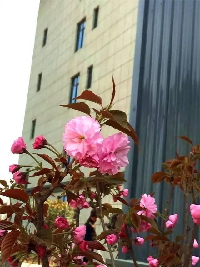 河南路友机械办公大楼有花朵依傍